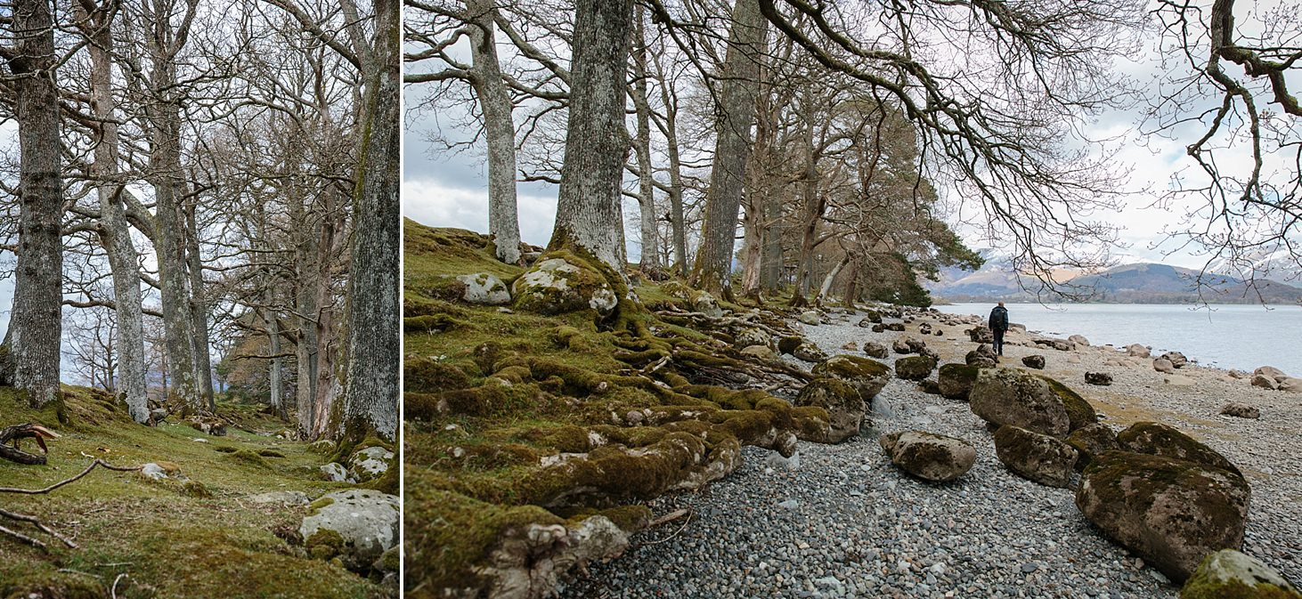 lake district travel photography trees