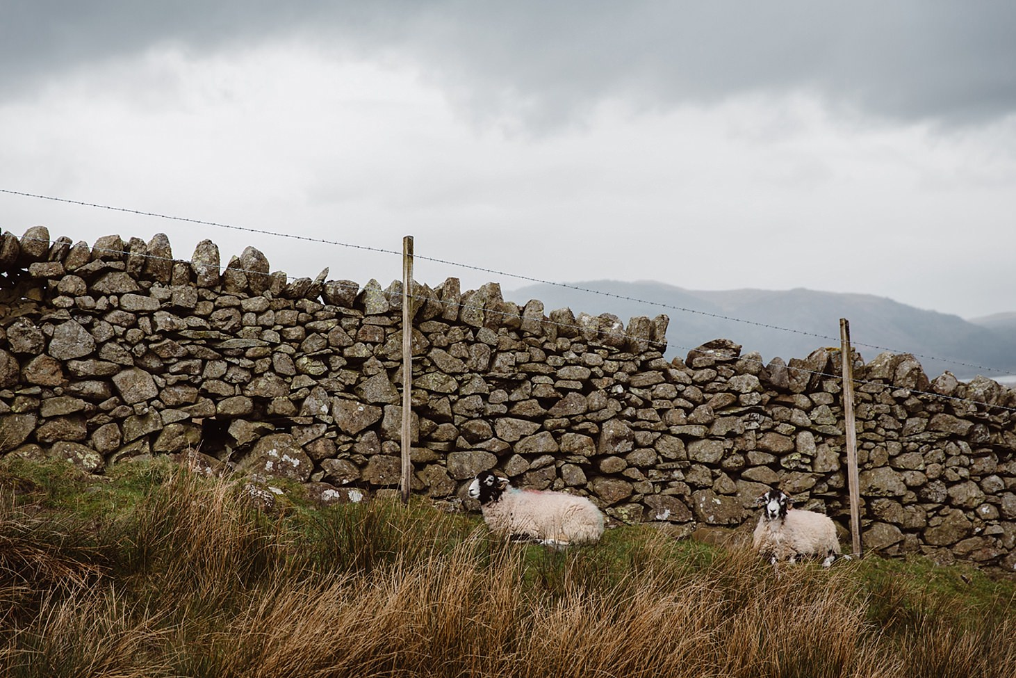lake district travel photography sheep