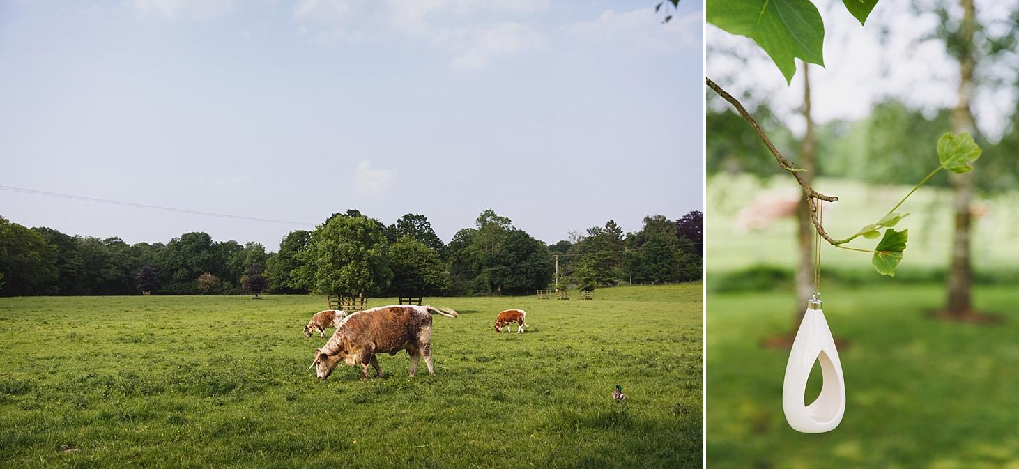 gate street barn wedding photography cows