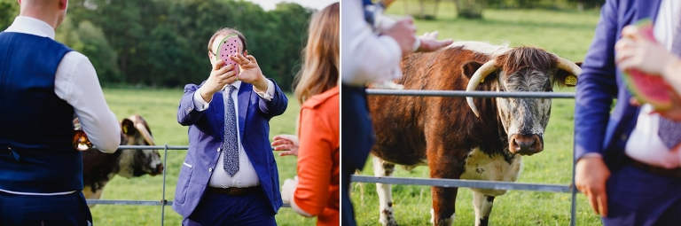 gate street barn wedding photography wedding guest selfie with cow
