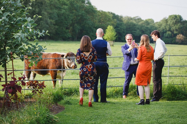 gate street barn wedding photography wedding guests with cows