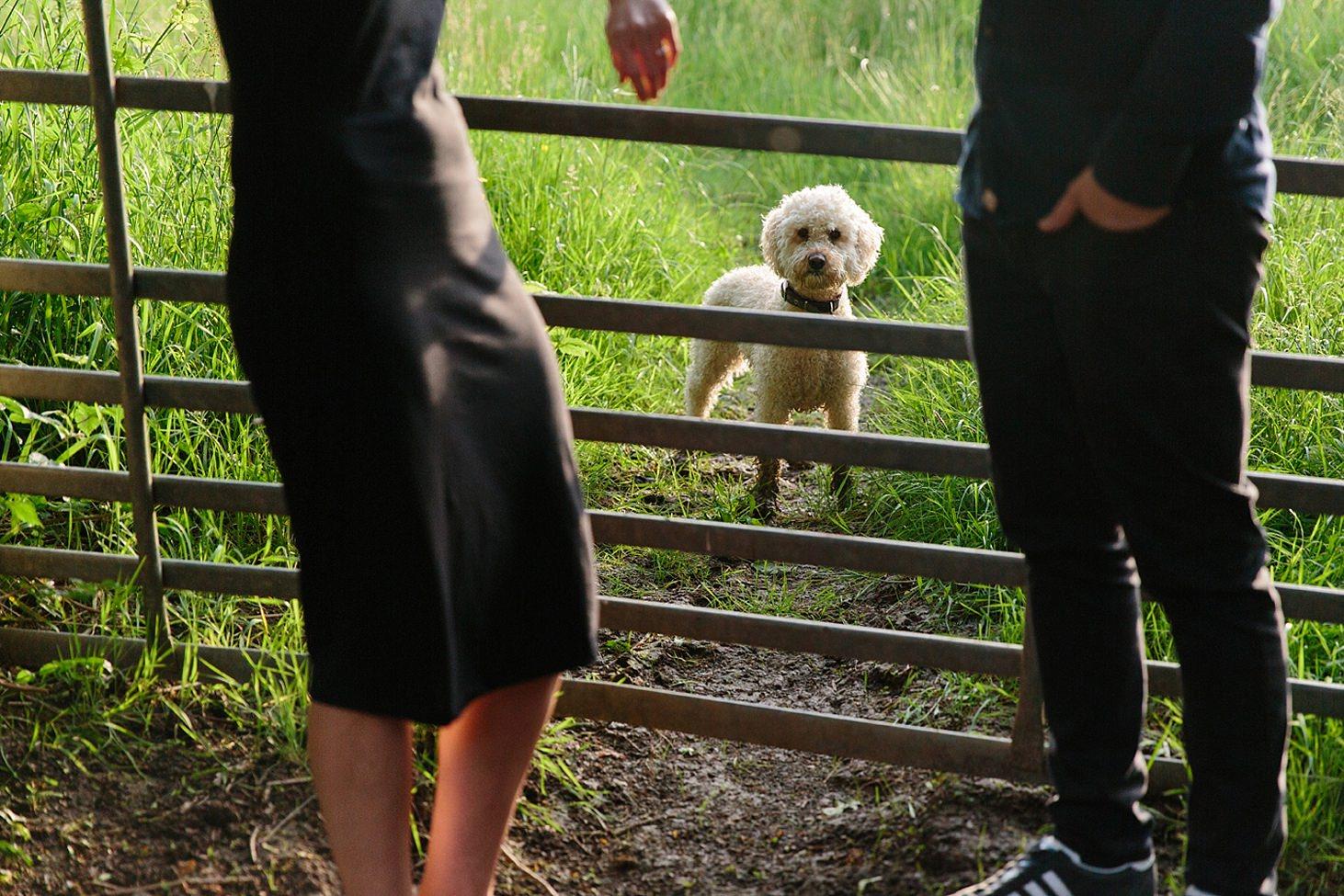 trent park engagement shoot dog looking through gates