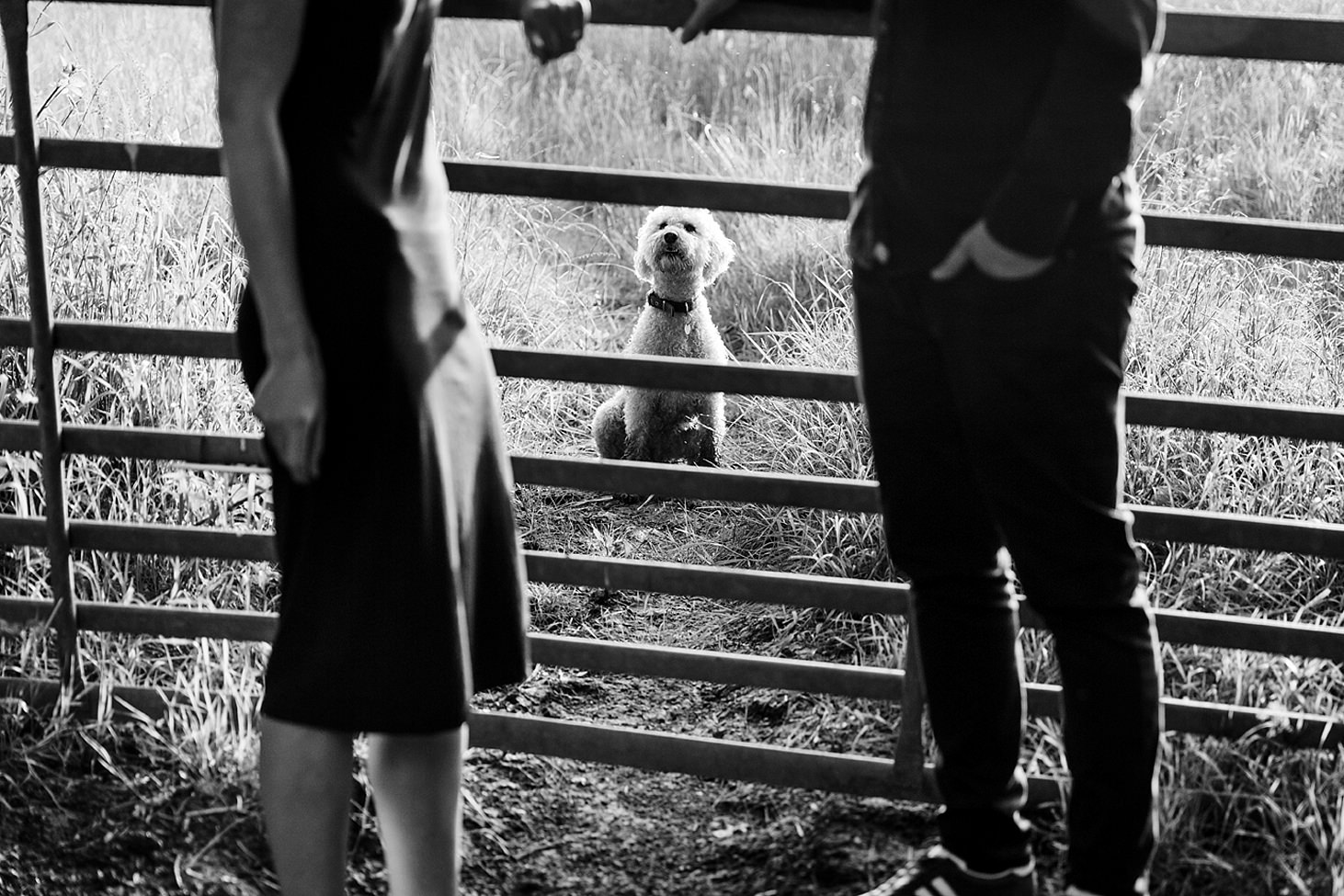 trent park engagement shoot dog looking at couple