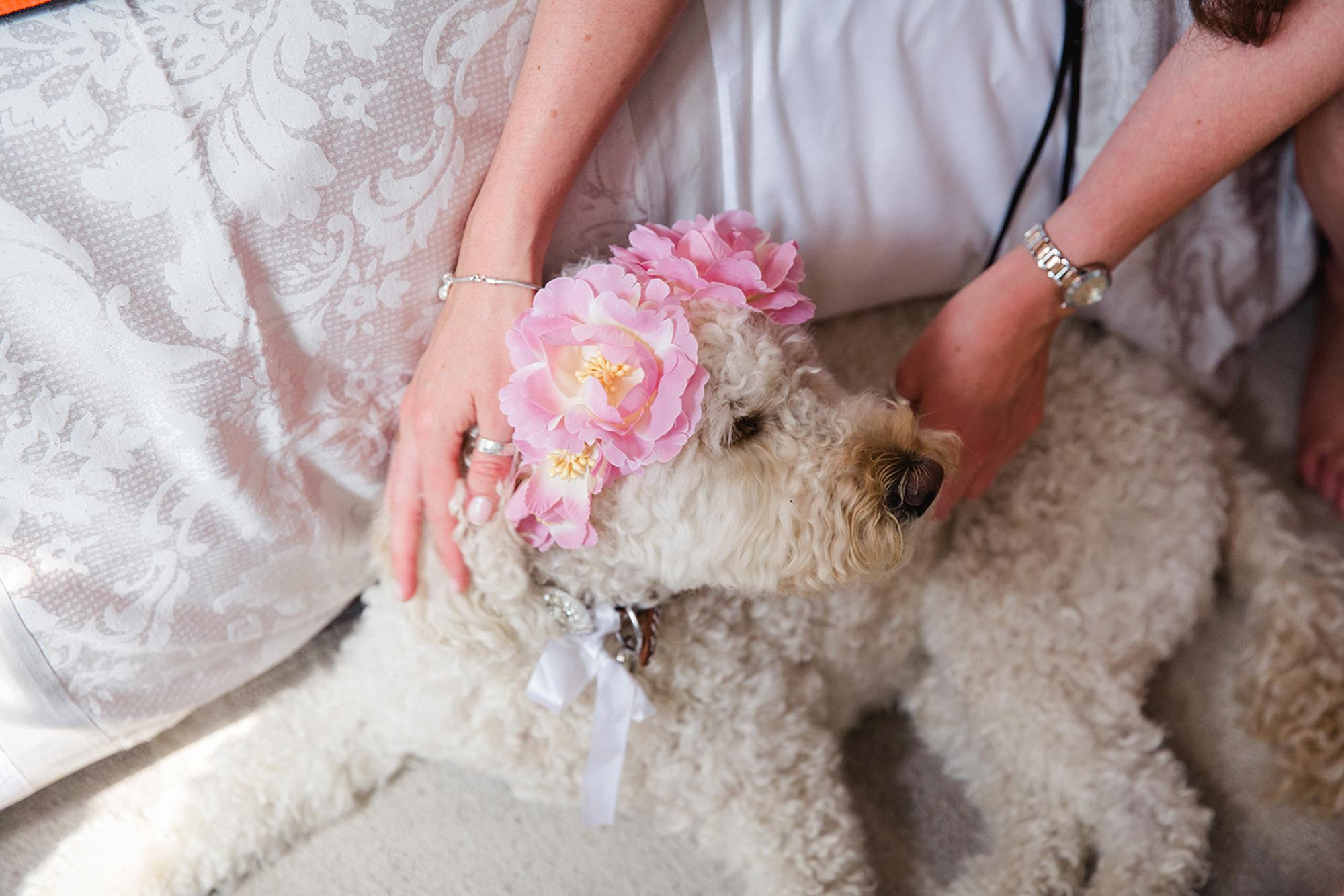 outdoor humanist wedding photography wedding dog