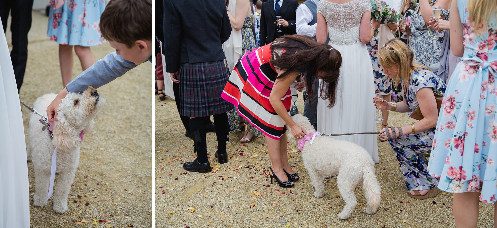 outdoor humanist wedding photography guests with wedding dog