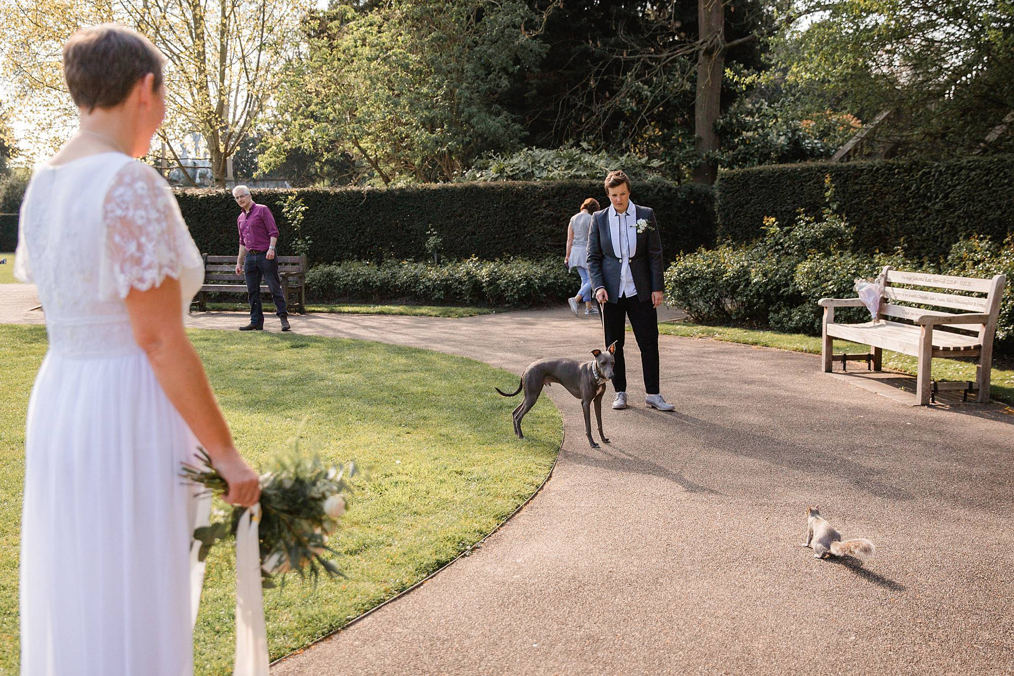 Twickenham wedding photography brides' whippet chasing squirrel