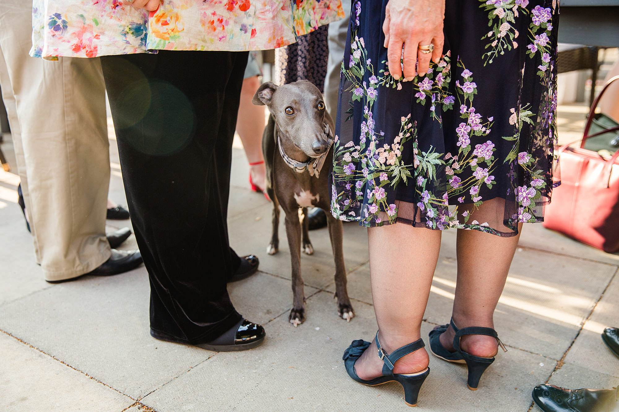 a dog peeks out from between wedding guest's legs at twickenham pub wedding